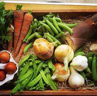 #食べチョク にて旬のお野菜と卵の詰め合わせセット販売開始しました