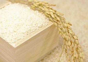 清流米 新米コシヒカリ 5kg
