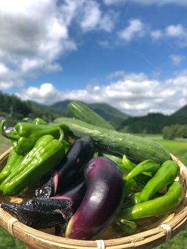 【感動美味夏野菜とお米】の詰め合わせセット