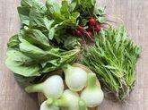 【丹波篠山の朝採りお野菜を詰め合わせにしてお届けします】
