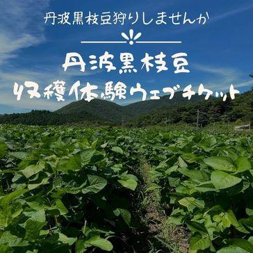 【受付終了】黒枝豆13株分の収穫体験予約ウェブチケット(1人~4人用)
